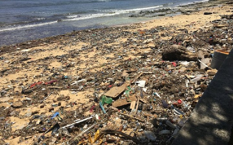 Garbage and brown algae are strewn along ocean side beaches