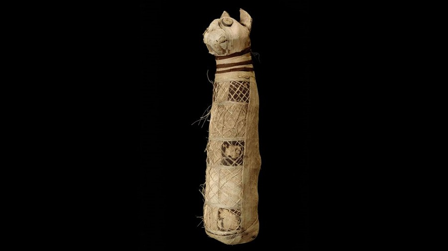 The Rennes Mummy