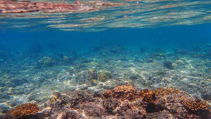 Earth's ocean
